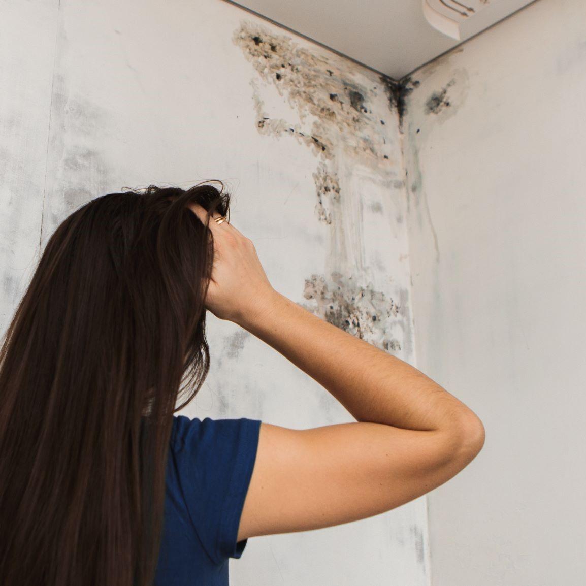 7 tipů, jak předcházet vzniku plísní v bytě